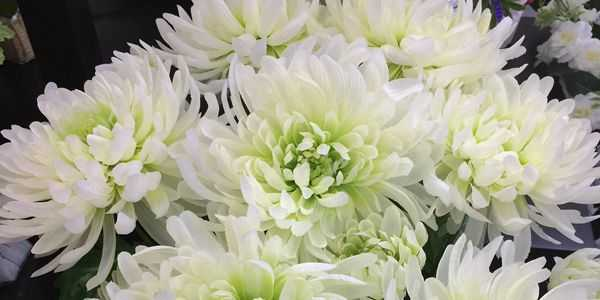 High quality silk artificial chrysanthemum flowers artificial high quality silk artificial chrysanthemum flowers artificial flowers factorymanufacturersdesignchina dongguanshowroom mightylinksfo