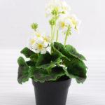 Artificial Flower 18*18*25cm Geranium in plastic pot GS-03318104-W1