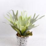 Artificial Plant 36*36*23cm Platycerium in small cement pot GS-03318021
