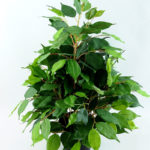 Artificial Tree 53CM Fricus Tree GF18018-230