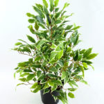 Artificial Tree 55CM Fricus Tree GF18022-340