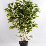 Artificial Tree 80cm Ficus GF18091-455P0P4
