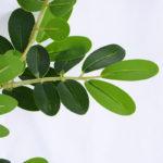 Artificial Plant 33*94cm Locust tree branch GS-52019009