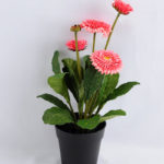 Artificial Flower 17*17*33cm Daisy in plastic GS-03319181-P1