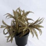 Artificial Flower 24*24*23cm Fern in Plastic pot GS-03319195-R2