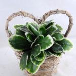 Artificial Flower 17*16*21cm Leaf in Basket GS-03319066