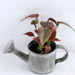 Artificial Flower 15.5*16*13cm Leaf in Tin pot GS-03319172-R1
