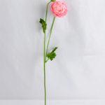 Artificial Flower 7*54CM Peony*2 GS-53619008-P1