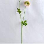 Artificial Flower 7*54CM Peony*2 GS-53619008-P2