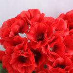 Artificial Flower 39*20*30cm begonia in Tin pot GS-03319053-R1