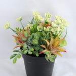 Artificial Flower 16*16*18cm succulent plants in Plastic pot GS-03319163