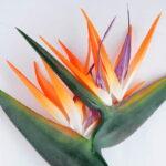 Artificial Flower 37*135CM Bird Of Paradise GS-41519008-O1