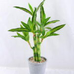 Artificial Tree 25*26*45cm Potted Bamboo In Paper Pot GS-24519019