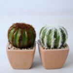 Artificial succulent 5.5*5.5*8CM Cactus in plastic pot GS-45219123