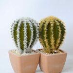 Artificial succulent 5.5*5.5*12CM Cactus in plastic pot GS-45219124