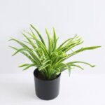 Artificial Plant 37*37*29cm Chlorophytum in Plastic pot GS-03319395