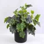 Artificial Plant 30*30*34cm Leaf in plastic pot GS-03319383