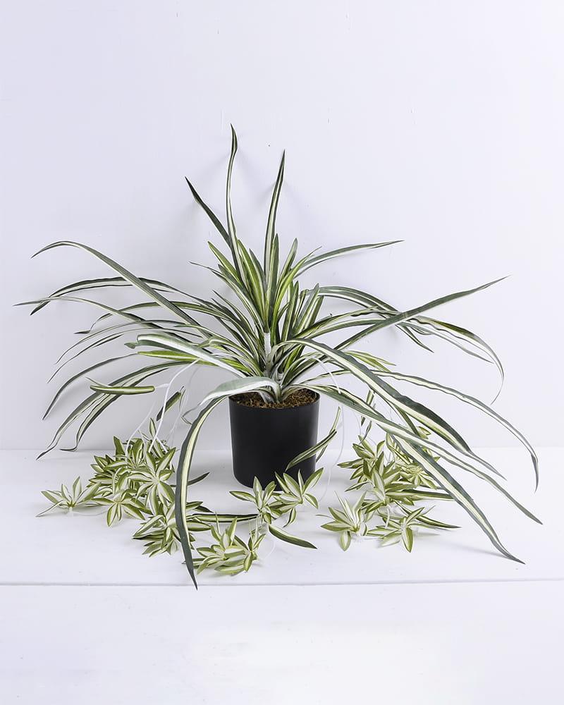 Artificial Plant 58*58*56cm Leaf in plastic pot GS-03319388