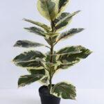 Artificial Tree 45*33*75CM Rubber wood tree in plastic pot/lvs21 GS-26620005